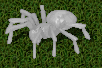 frost spider